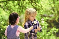 Happy kid having fun. Girl give dandelion flower for boy. In spring or summer park. Children on idyllic sunny day outdoor. Childhood, family, love concept Stock Photography