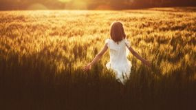 Girl running on cereal field. Happy kid is having fun on nature in the summer. Child is playing on meadow at sunset background. Girl is running on cereal field royalty free stock photography