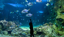 Happy kid observing fishes at a large aquarium. Happy kid observing fishes swimming in a large aquarium stock photo