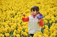 Happy kid with spring flowers on yellow daffodils field, little girl on vacation in Netherlands Stock Photo