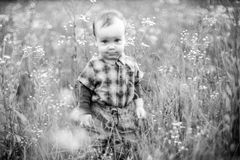 Toddler in wild field of chamomile royalty free stock image