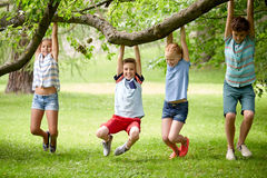 Happy kids hanging on tree in summer park Royalty Free Stock Photos