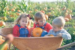 Happy kids sitting inside wheelbarrow at field pumpkin patch Royalty Free Stock Image