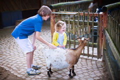 Happy kids petting a goat in a zoo. Happy laughing boy and his little toddler sister, adorable curly girl, playing together petting a goat laughing and having stock images