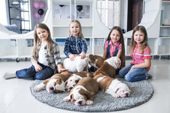 Happy kids with puppies of English bulldog on the floor Royalty Free Stock Images