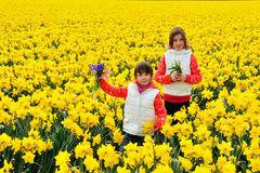Happy kids with spring flowers on yellow daffodils field, children on vacation in Netherlands Royalty Free Stock Photography