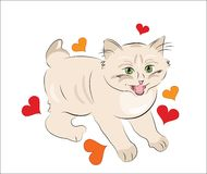 Happy  kitten Royalty Free Stock Images