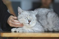 Happy kitten likes being stroked by woman`s hand, love for the animals royalty free stock images