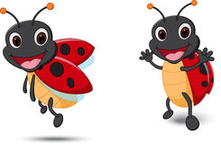 Happy Lady bug cartoon Stock Image