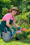 Happy lady transplanting spring flowers. Royalty Free Stock Photography