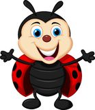 Happy ladybug cartoon Royalty Free Stock Image