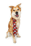 Happy Large Crossbreed Dog Wearing Heart Scarf Stock Photos