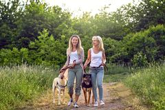 Happy laughing young women walking their dogs stock photos
