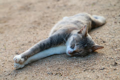 Happy lay down cat. The cat laying down look so happiness Stock Image