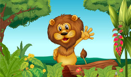 A happy lion in the forest Stock Images