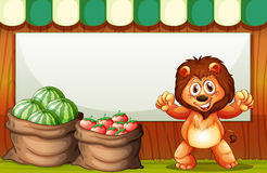 A happy lion selling fruits with an empty template at the back Royalty Free Stock Photography