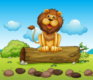 A happy lion on a trunk of a tree. Illustration of a happy lion on a trunk of a tree Royalty Free Stock Photos