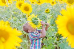 Happy little boy on the field of sunflowers Royalty Free Stock Photos