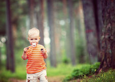 Happy little boy in the forest Stock Image
