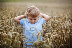 Happy little boy having fun in wheat field in summer Stock Image