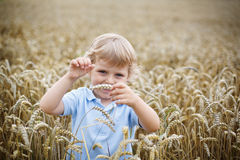 Happy little boy having fun in wheat field in summer Royalty Free Stock Photos