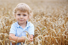 Happy little boy having fun in wheat field in summer Stock Photography
