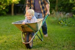 Happy little boy having fun in a wheelbarrow pushing by dad in domestic garden on warm sunny day royalty free stock images
