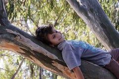 Happy little boy lies on the trunk of eucalyptus tree. On vacation Stock Photos