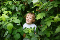 Happy little boy on organic self pick raspberry farm Stock Image