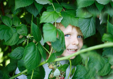 Happy little boy on organic self pick raspberry farm Stock Images