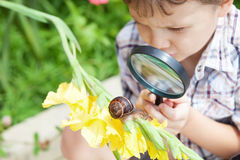Happy little boy playing in the park with snail at the day time. Royalty Free Stock Photography