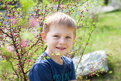 Happy little boy posing by a blooming cherry tree Royalty Free Stock Image