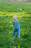 Happy little boy runs on a blossoming meadow Royalty Free Stock Photo