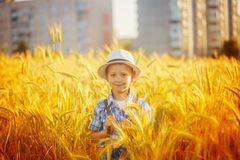 Happy little boy walking on wheat summer field. Harvest concept Stock Photos