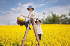 Happy little boys, sitting on a wooden ladder in yellow fie stock photo