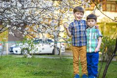 Happy little brothers kids in spring garden with blooming trees, outdoors Royalty Free Stock Image