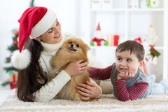 Happy little kid boy, mother and dog at Christmas stock images