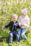 Happy little children in a blossoming tree Stock Photography