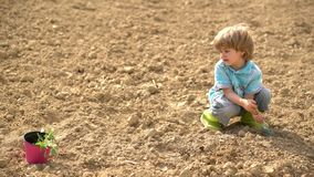 Happy little farmer planting on spring field. Cute kid boy watering the sprout on field. Child and vegetables on the stock footage
