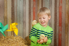 Happy little farmer. Toddler Playing with Baby Chicks royalty free stock photos