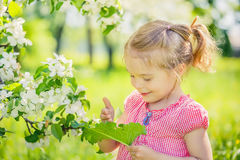 Happy little girl in apple tree garden Stock Photography