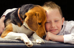 Happy little girl and beagle puppy stock photos