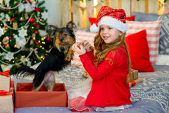 Happy Little girl and dog at Christmas Stock Photo