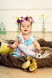 A happy little girl in a dress with flowers on her head is sitting in a nest and cute fluffy Easter ducklings and a white Easter stock photo