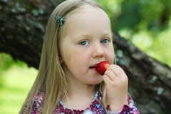 Happy little girl eating a strawberry. Stock Image