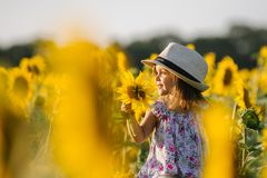 Happy little girl on the field of sunflowers in summer. beautiful little girl in sunflowers Stock Images