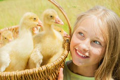 Happy little girl with goslings Royalty Free Stock Photos