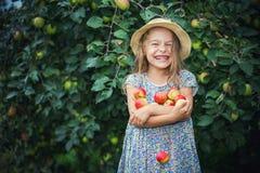 Little girl in the apple garden. Happy little girl holding apples in the garden Stock Photography