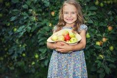 Little girl in the apple garden. Happy little girl holding apples in the garden Stock Photos