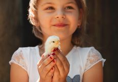 Happy little girl  holds a chicken in his hands. Child with poul Stock Photo
